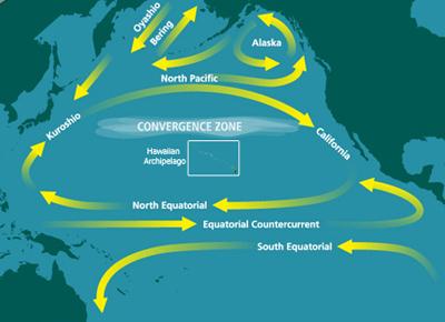 colocius-pacific-trash-vortex–isola-di-spazzatura-oceano-pacifico